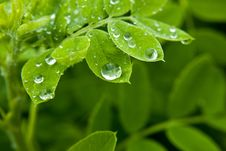 Free Dew On Leaf Stock Photography - 14246722