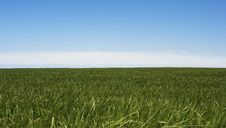 Free Green Grass Against Blue Sky Background Stock Images - 14247174