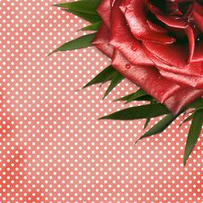 Free Grunge Background With Red Rose For Design Royalty Free Stock Image - 14248256