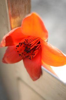 Free Cotton Flower Stock Photo - 14249320