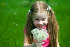 Free Little Girl With Dandelions Stock Photo - 14249390