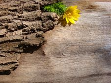 Free Wood Texture Royalty Free Stock Photography - 14251697