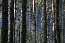 Free Forest Abstract Background. Stock Image - 14251881