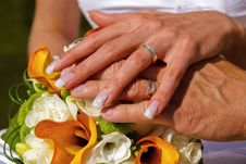 Free Wedding Rings Royalty Free Stock Photography - 14253737