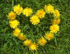 Free Floral Heart Stock Photography - 14253852