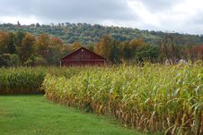 Red Barn And Corn Royalty Free Stock Photo