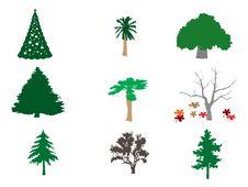 Free Types Of Trees Illustration Royalty Free Stock Photo - 14254935