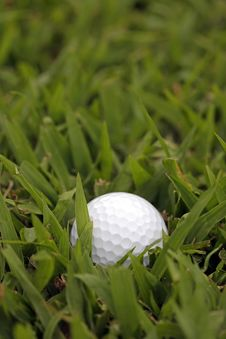 Free Lost Golf Ball In Tall Grass Stock Image - 14255011