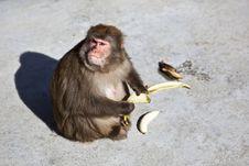 Monkey With Banana Stock Photo
