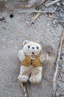 Free The Dirty Teddy Bear Stock Photo - 14256220