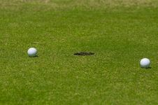 Free Golf Royalty Free Stock Images - 14256739