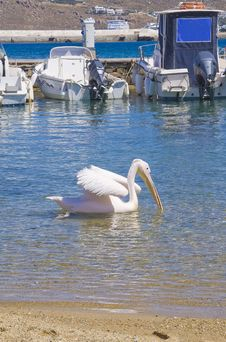 Free Pelican Floating On The Sea Near Fishing Boats Royalty Free Stock Photography - 14257407