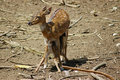 Free Deer Feeding Its Fawn Royalty Free Stock Photography - 14263567