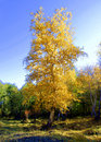 Free Gold Of Autumn Stock Photo - 14264800