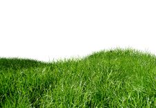 Free Green Grass Royalty Free Stock Photography - 14261107