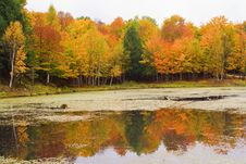 Free Lake With Autumn Colors Stock Photography - 14262522