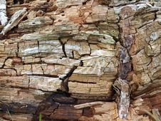 Free Wood Cracks Royalty Free Stock Photography - 14262757