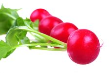 Free Fresh Red Radish Stock Images - 14262954