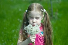 Free Little Girl With Dandelions Royalty Free Stock Photos - 14264648