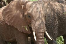 Africa,Tanzania Lake Manyara Stock Images