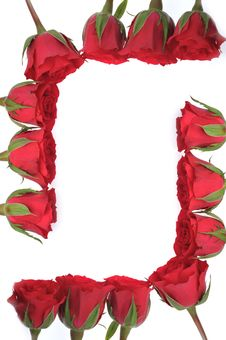Free Beautiful Red Roses Stock Images - 14266364