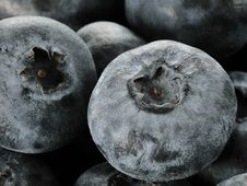 Free Blueberries Royalty Free Stock Photos - 14266768