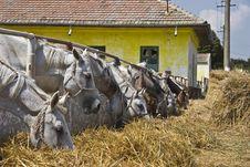 Free Horses In Line Stock Photos - 14266773