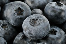 Free Blueberries Royalty Free Stock Photography - 14266797