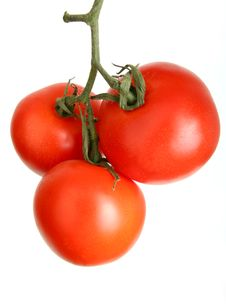 Free Tomato Cherry On Branch Royalty Free Stock Photos - 14266878