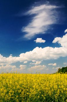 Free Wonderful Rapefield And Cloudscape By Springtime. Royalty Free Stock Photography - 14269107