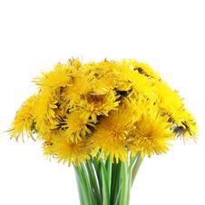 Free Fresh Bouquet Of Yellow Dandelion Royalty Free Stock Photos - 14269948