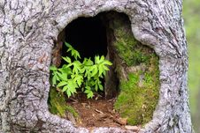 Free Plants In Hollow Tree Stock Photo - 142645110