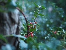Free Dżu Dżu Garden Stock Photography - 142645262