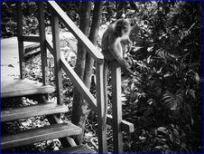 Free Do Not Feed The Monkeys Stock Photos - 142645293