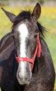 Free Nice Horse Royalty Free Stock Photo - 14270095