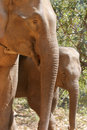 Free Elephant Stock Images - 14273484
