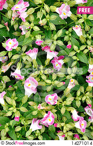 Free Pattern Composed By Morning Glory Flower Stock Images - 14271014