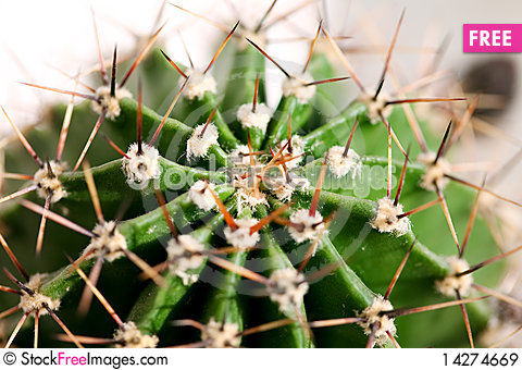 Free Cactus Close Up Royalty Free Stock Images - 14274669
