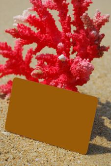 Coral And Cards Stock Image