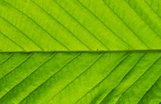Free Green Leaf Stock Photo - 14273960