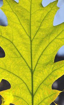 Free Green Leaf Stock Image - 14273971