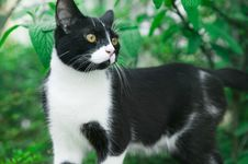 Young Male Cat In The Garden Royalty Free Stock Photo