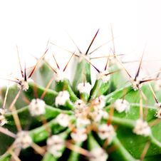 Free Cactus Close Up Stock Photo - 14274700