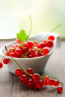 Free Red Currant Royalty Free Stock Photo - 14276125