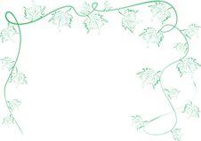Green Grape Leafs Ornament Stock Image