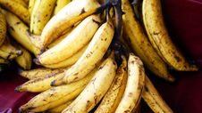 Free Horn Banana Stock Images - 14277124