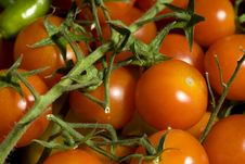 Little Tomatoes Royalty Free Stock Photography