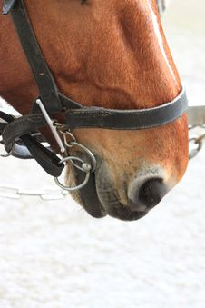Free Horse In A Harness_8 Royalty Free Stock Photo - 14278315