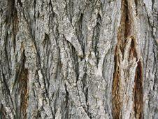 Free Texture Of Tree Bark Stock Photography - 14278842