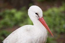 Free Stork Royalty Free Stock Image - 14278856